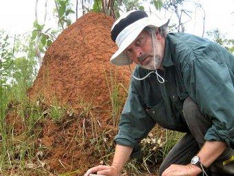 Termite Specialist Don