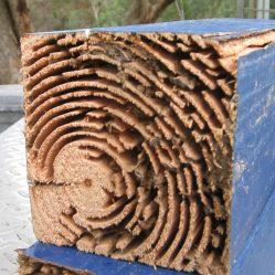 damage termite control