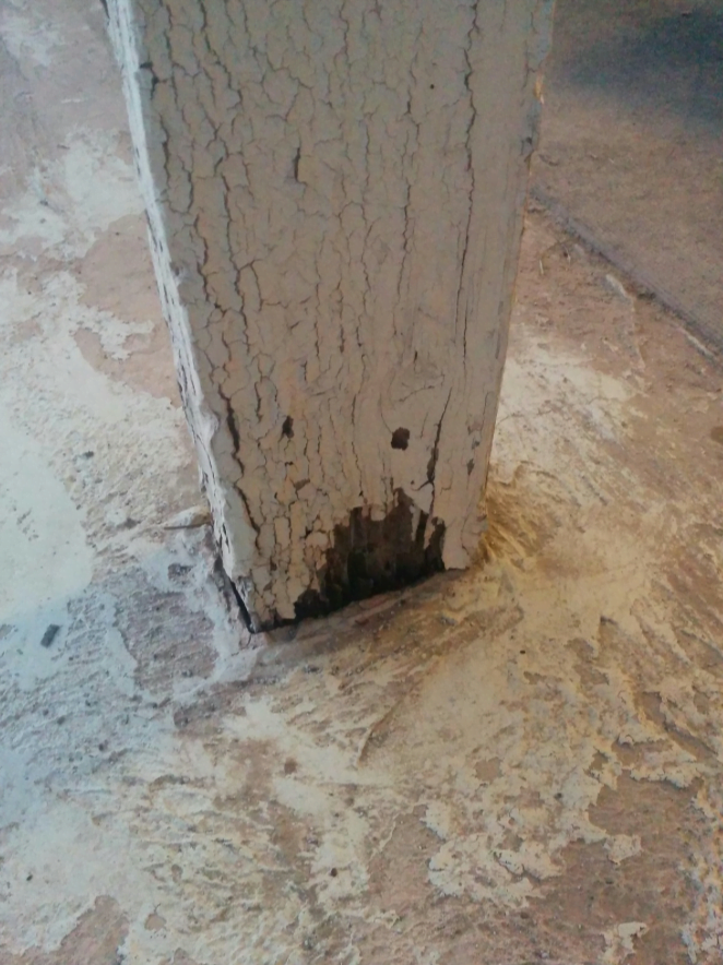 Melbourne Termite Risk Management